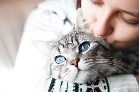 Better Cat Care Tips For Better Cat Owners
