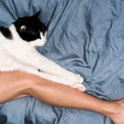 Basic Cat Tips You Can Put Into Practice Today