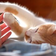 Check Here For Excellent Tips About Cats