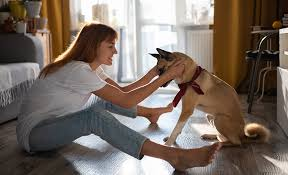 Getting The Best Behavior From Your Dog