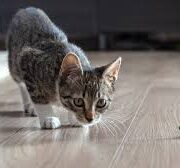 Great Solutions For Cats That Anyone Can Follow