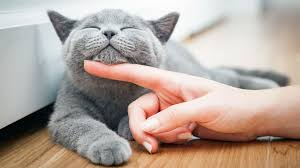 Keep Your Cat Looking And Feeling Its Best With These Tips.