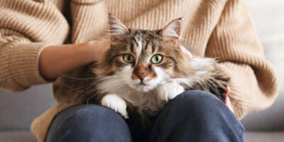Purrfect Advice To Making Your Cat Happier
