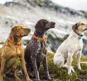 Simple Tips For A Well-Trained Canine Companion