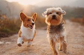 Simple Solutions About Dogs That Are Easy To Follow