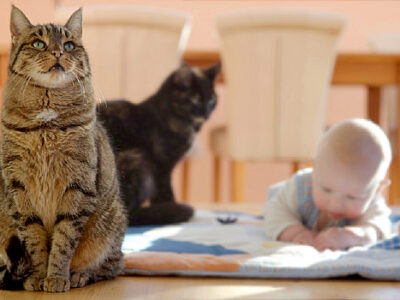 Check Out This Fabulous Article About Cats