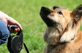Handy Tips To Help You Successfully Train Your Dog