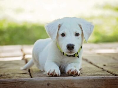 Simple Tips To Train Your Dog Quickly And Effectively